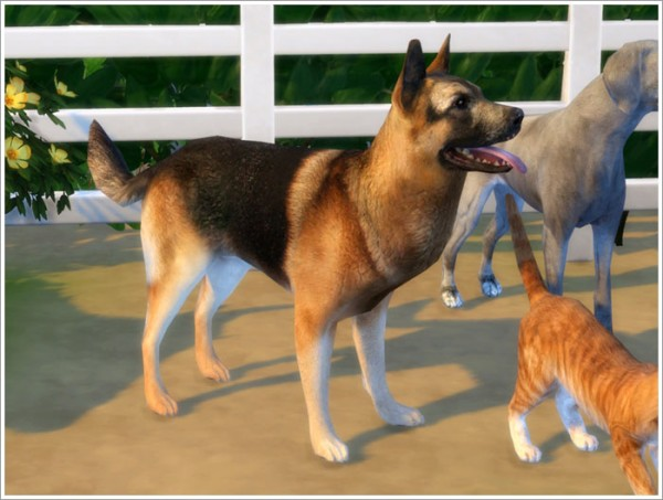 Sims by Severinka: Animals converted part I