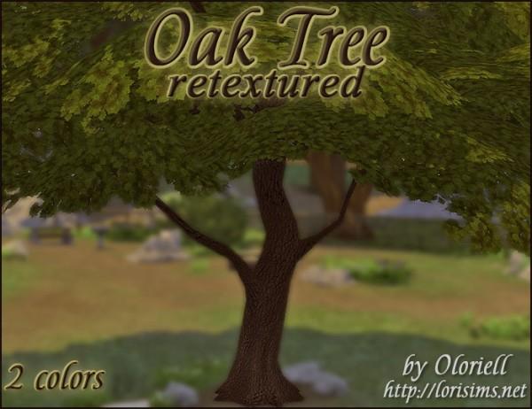 Lori Sims: Oak tree