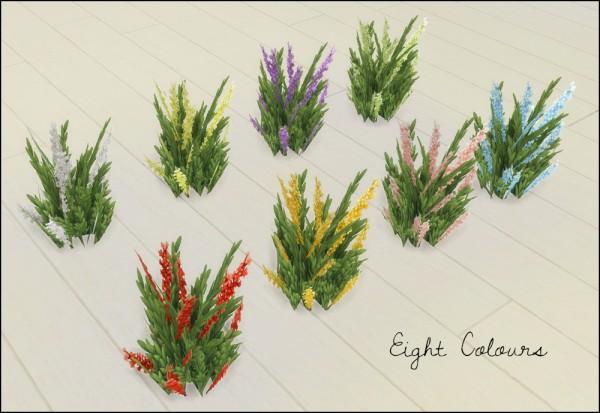 Martine Simblr: Potted lavender