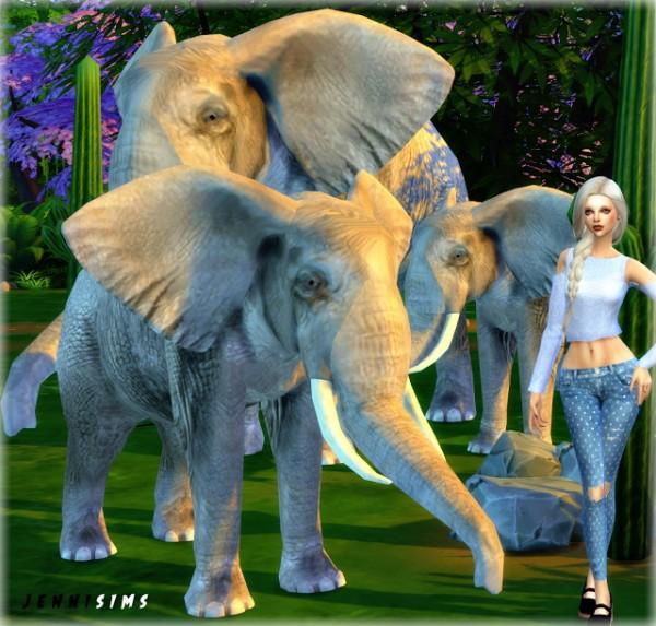 Jenni Sims: Pets sets Decoration   Elephant, Cats, Poodles