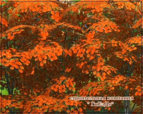 Sims by Severinka: Trees with autumn leaves