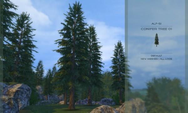 Alf Si: Conifer tree 01