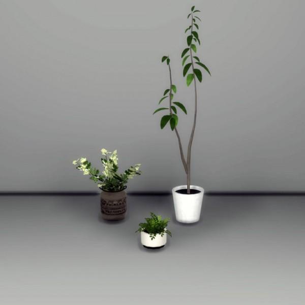 Leo 4 Sims: 3 Deco plants