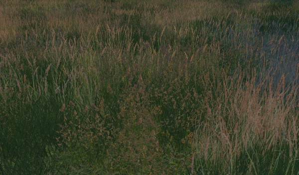 Alf Si: Retextures: grass of Windenburg