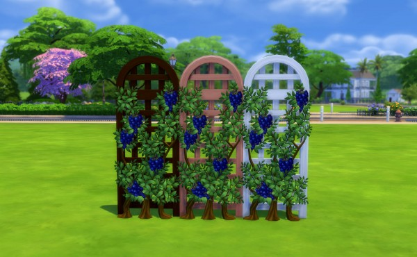 Mod The Sims: Get Fruity: Vines of Prosperity by Snowhaze