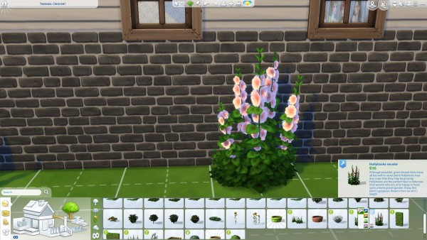 Mod The Sims: Hollyhocks in new colors! by Nuttchi