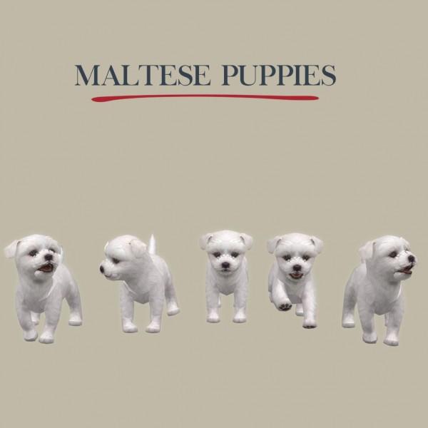 Leo 4 Sims: Maltese Puppies