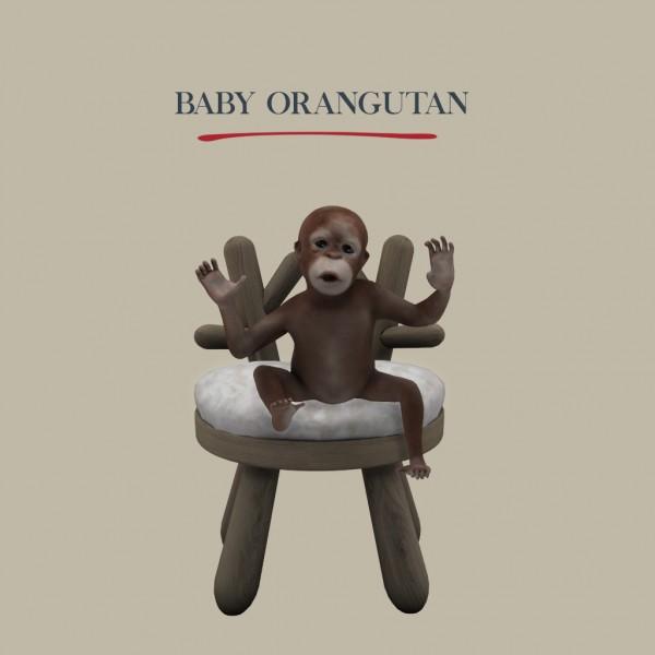 Leo 4 Sims: Baby Orangutan