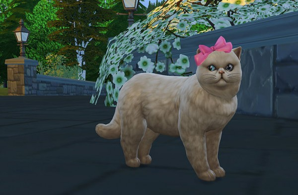 Studio K Creation: Cat head bow