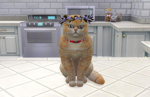 Studio K Creation: Flowers headpiece for cat