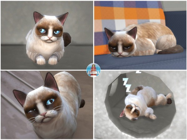 Akisima Sims Blog: Grumpy Cat