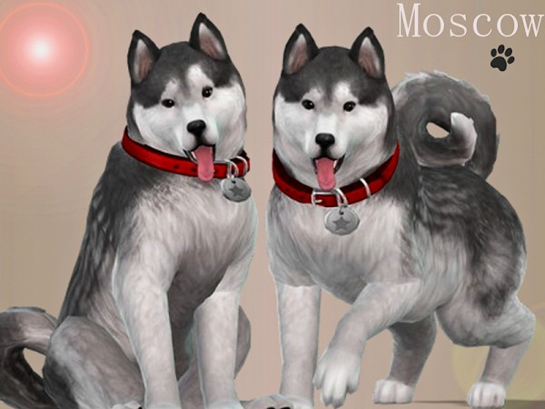 The Sims Resource: Moscow the Husky by Margeh 75