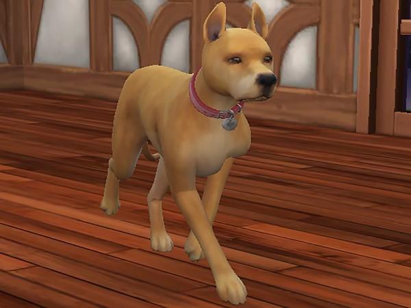The Sims Resource: Miss Marla dog by Kidakane
