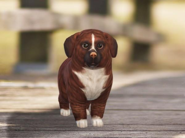 The Sims Resource Cinnamon Dog By Pinkzombiecupcakes