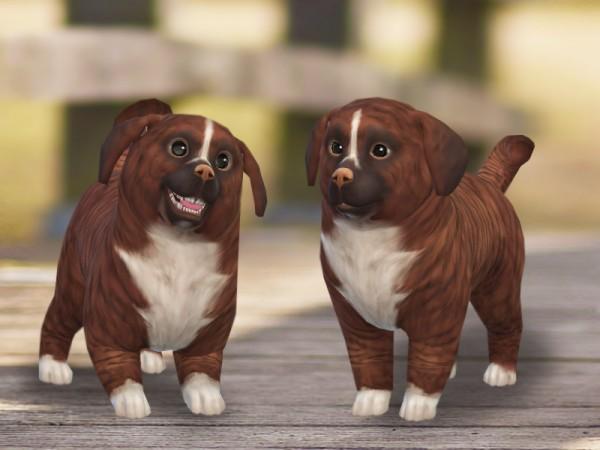 The Sims Resource: Cinnamon dog by Pinkzombiecupcakes