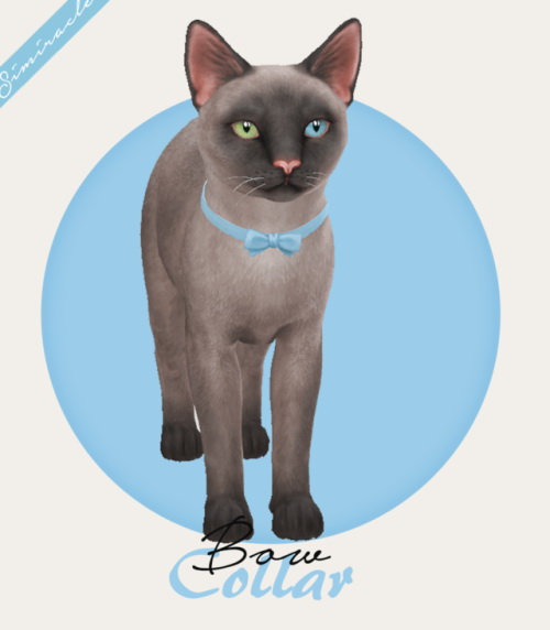 Simiracle: Bow Collar   Cats
