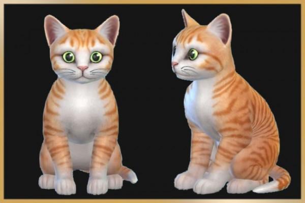 Blackys Sims 4 Zoo: Erwin cat by Schnattchen