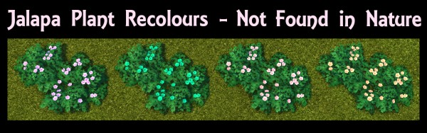 Mod The Sims: Jalapa Plant by Simmiller