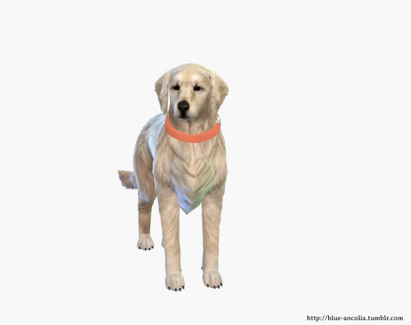 Simiracle: Golden Retriever Makeover