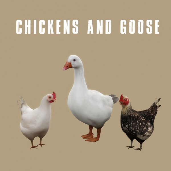Jom Sims Creations: Chickens and Goose