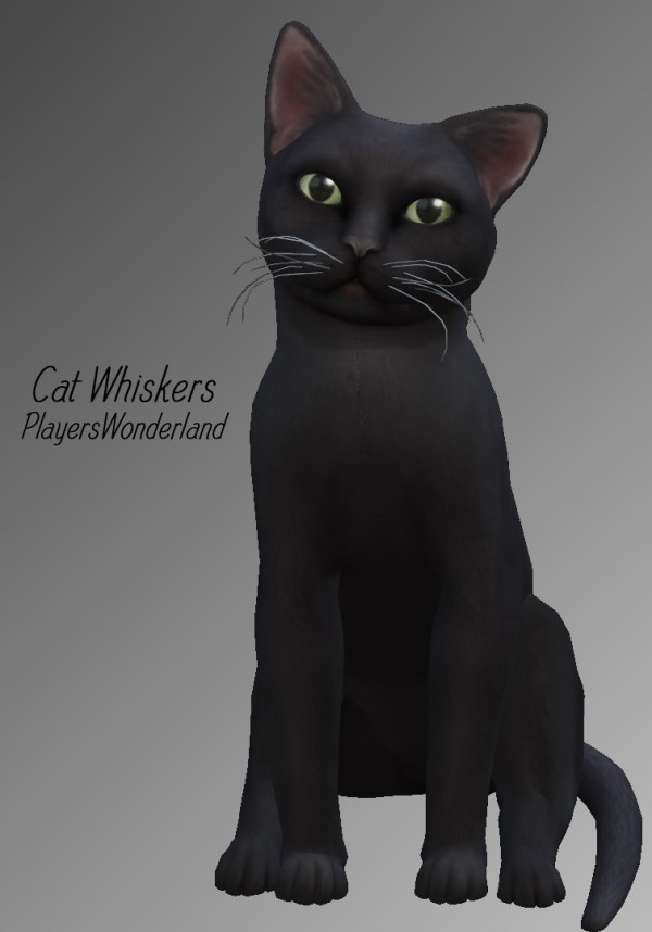 Players Wonderland: Cat Whiskers