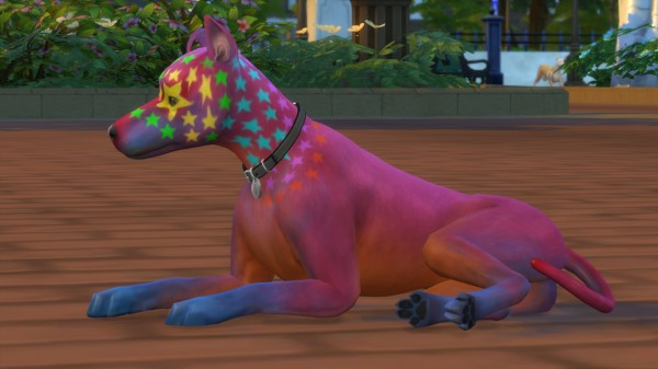 Mod The Sims: Rocco Superstar   Mixed Breed Dog (Basenji Dog) by PetWorld456