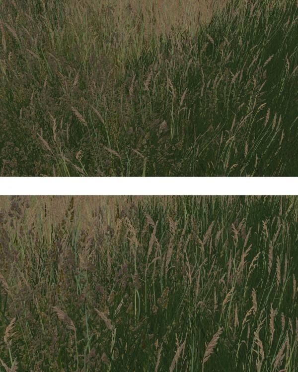 Alf Si: Grass of Windenburg