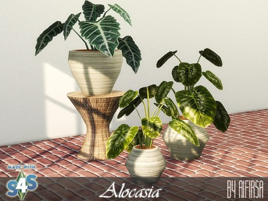 Aifirsa Sims: Indoor Plants