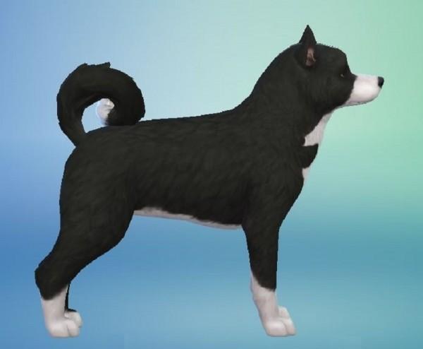 Mod The Sims: Karelian Bear Dog by ScientificallyCorrect82