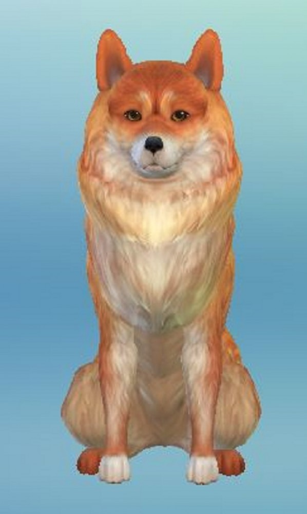 Mod The Sims: Finnish Spitz by ScientificallyCorrect82