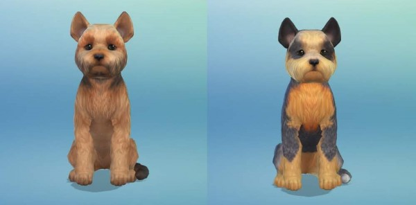 KyriaTs Sims 4 World: The Easterbrooks and their Yorkies