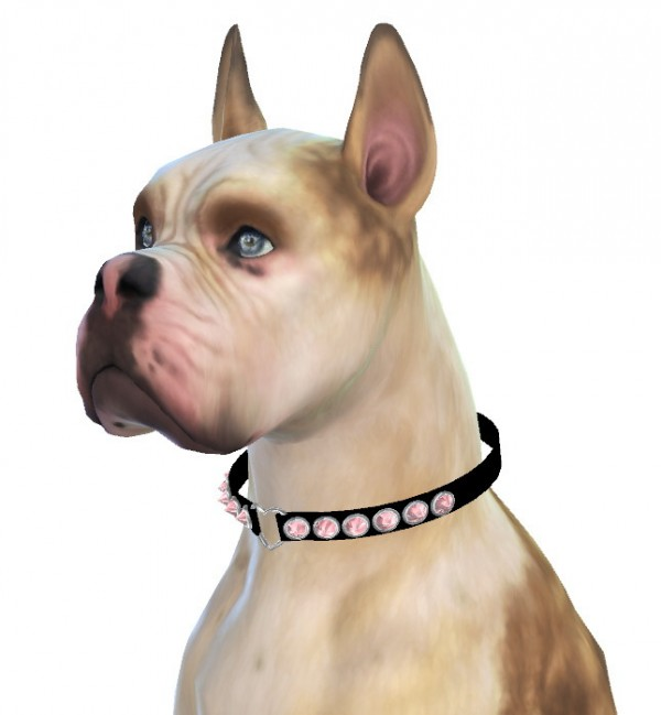 Enchanting Essence: Mika the Boxer Dog