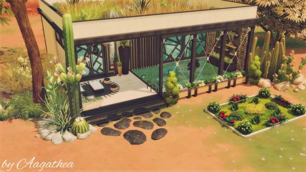 Agathea k: Mini Modern on Desert