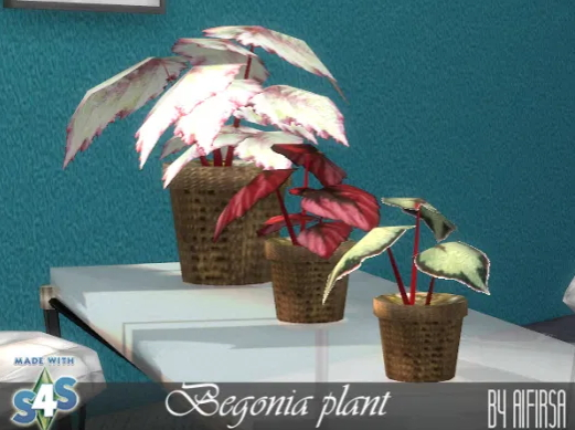 Indoor flowers from Aifirsa Sims