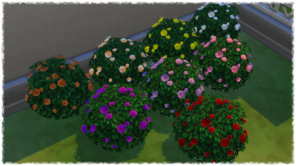 Mumumental Fall Mums Shrub 2020 by Wykkyd from Mod The Sims