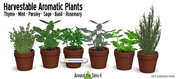 Aromatic Plants from Around The Sims 4