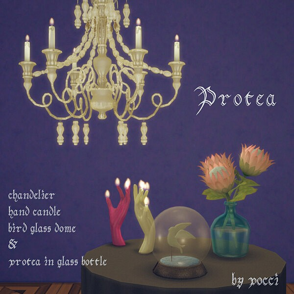 Set Protea by pocci from Garden Breeze